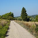 Mtb Tour - Tour on the truffle hills of San Miniato